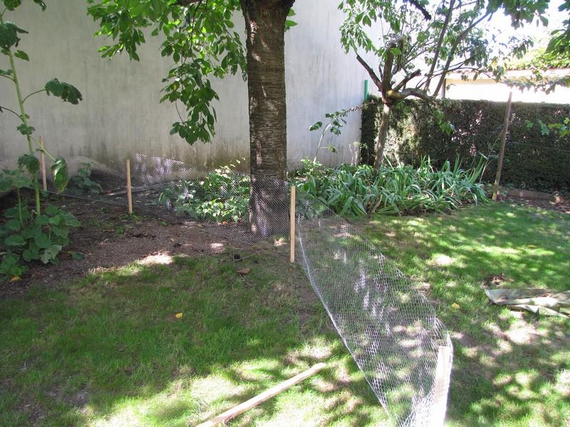 Un b b z 39 h risson dans mon jardin page 4 for Herisson dans mon jardin