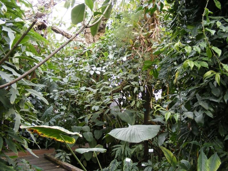 Le jardin botanique de nancy for Jardin botanique nancy