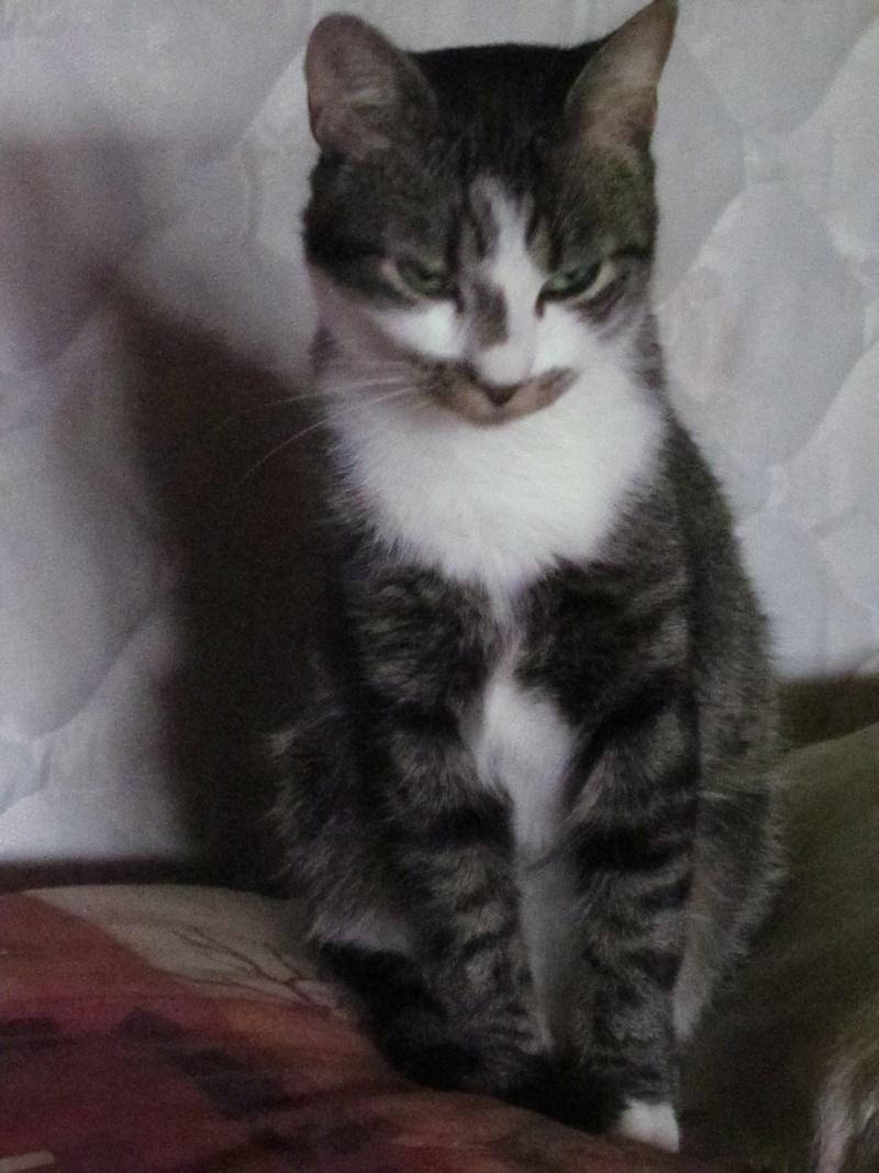 Mocka jeune chat tr s beaux yeux et tache de caf sur le - Tache de cafe sur tapis ...