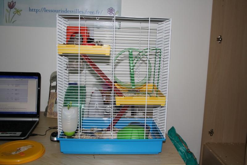 sujet cages vendre le forum sur la souris domestique. Black Bedroom Furniture Sets. Home Design Ideas