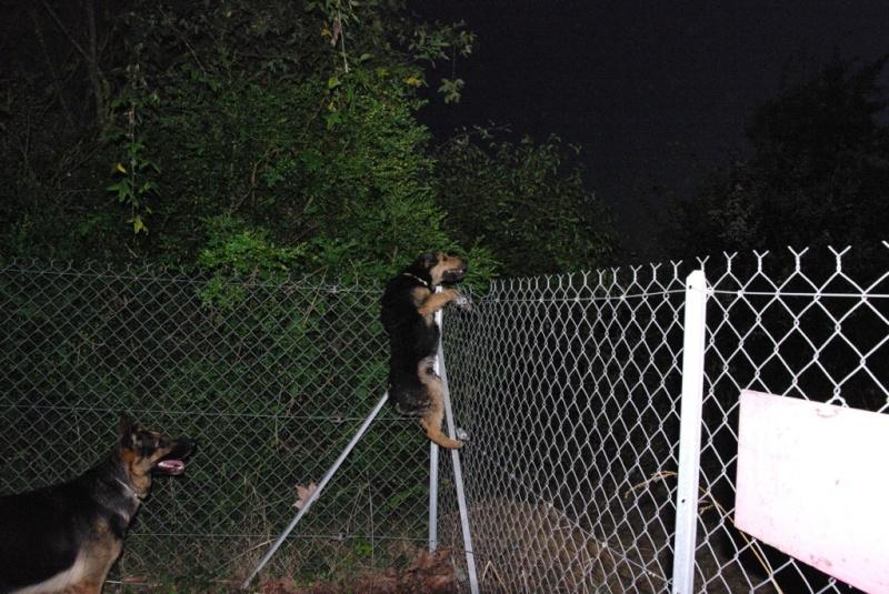 Forum du chien de berger allemand enclos et clotures for Cloture jardin pour chien
