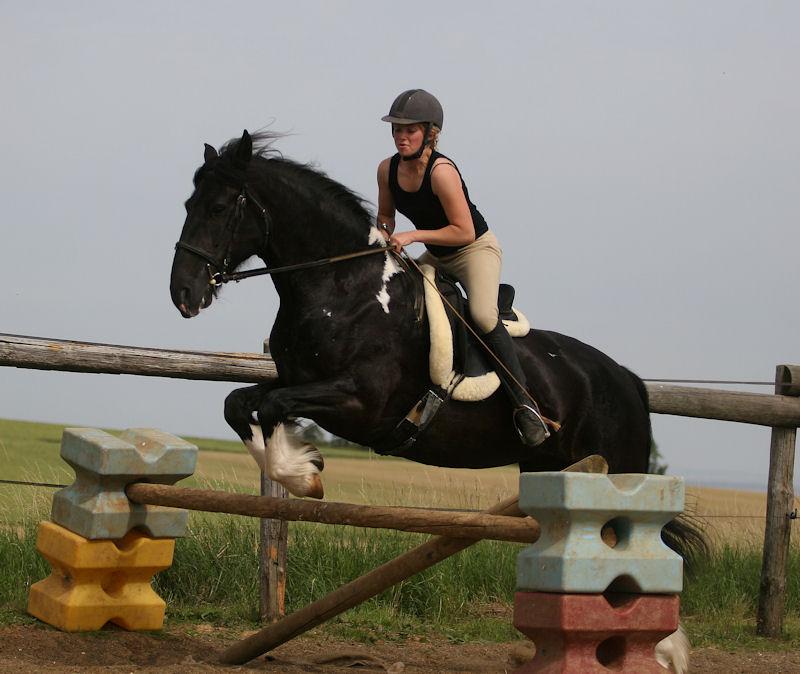 Domaine du loup levage de chevaux gypsians - Frison qui saute ...