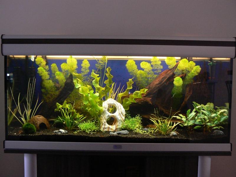 aquarium aquatlantis ambiance horizon 100 rponses 5 vues 806