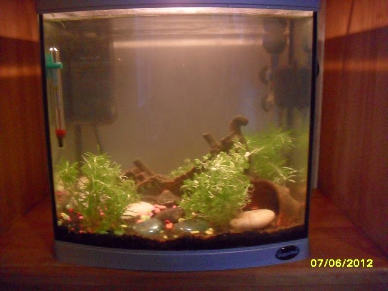 Aquarium 25l for Poisson rouge aquarium 25l