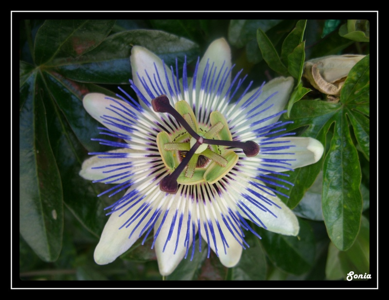 fleur_11