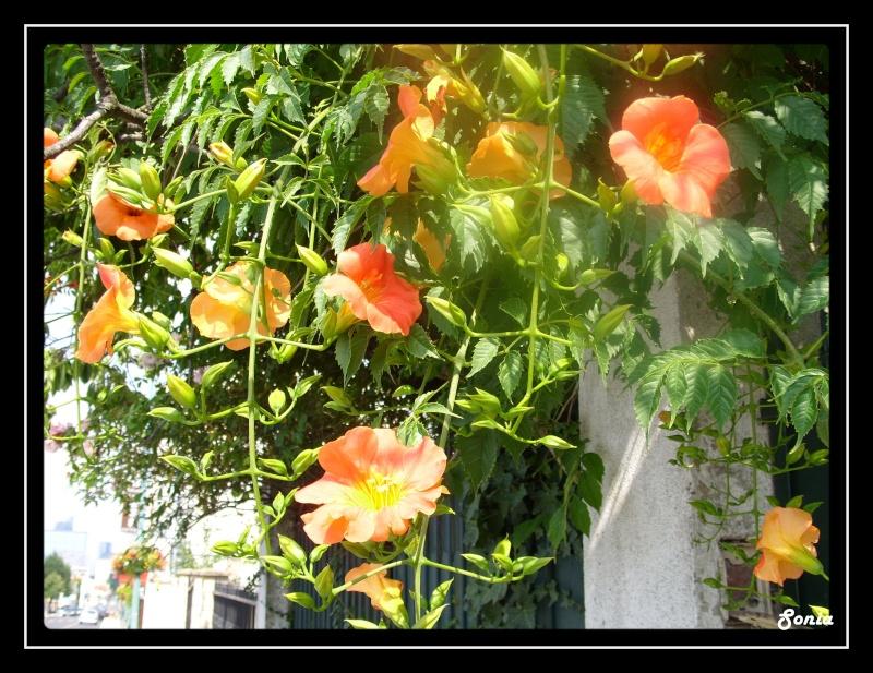 fleur_12