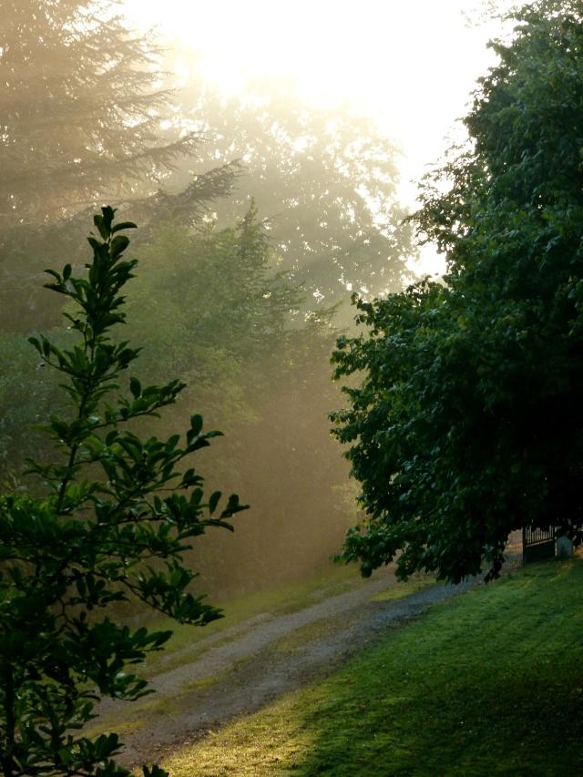The Fog...  dans Le jardin des souvenirs 00310