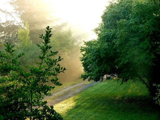 matinal... dans Le jardin des souvenirs 00510