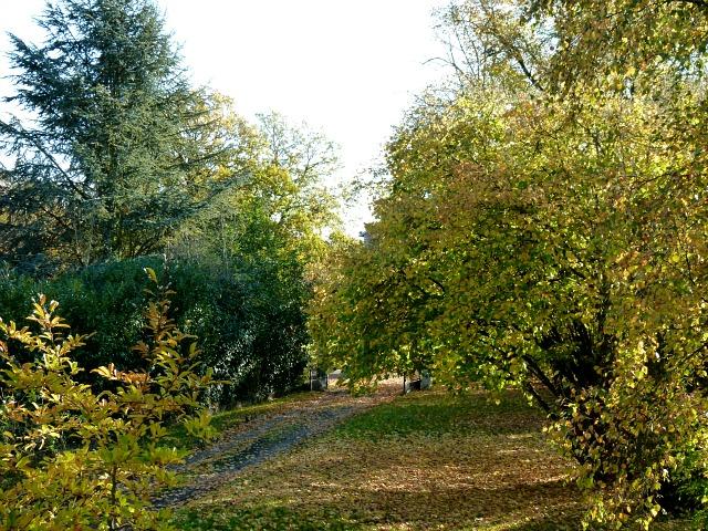 La tombée des feuilles... dans Le jardin des souvenirs 008hhh10