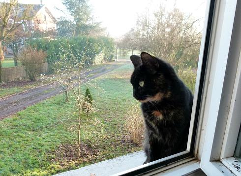 laisse la chatte pensive... dans Message du jour 008t10