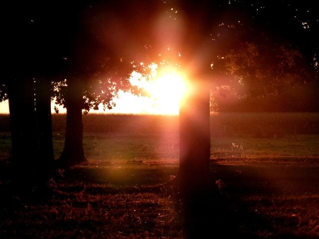 Jeux de lumière, un soir de fin d'été....  dans Le jardin des souvenirs 02710