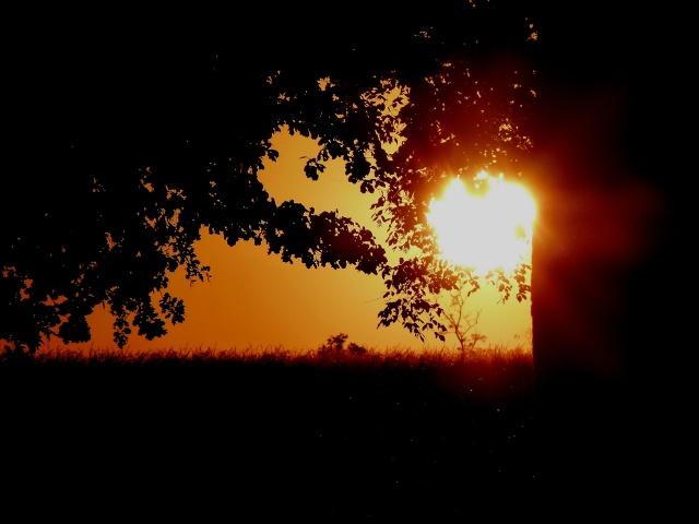 Playing with the sun...  dans Le jardin des souvenirs 02813