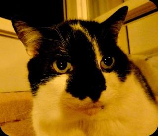 et le chat du soir...  dans Le Miroir des Chats 09411