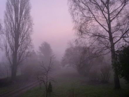 Petit matin...  dans Le jardin des souvenirs 116410