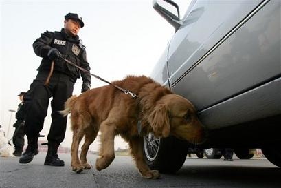 chiens loups et chiens loups chiens de police p kin. Black Bedroom Furniture Sets. Home Design Ideas