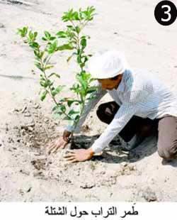كيفية زراعة الأشجار