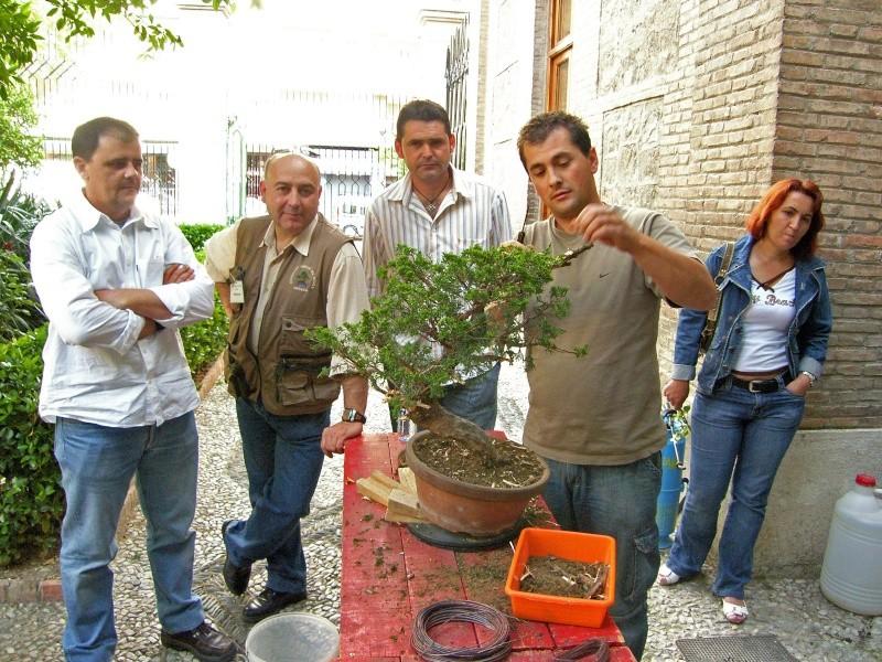 Un d a con los amigos del bonsai granadinos expo y demos for Eliminar cochinilla algodonosa