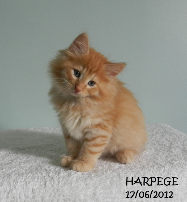 HARPEGE GRANDIT dans DIVERS 20120620