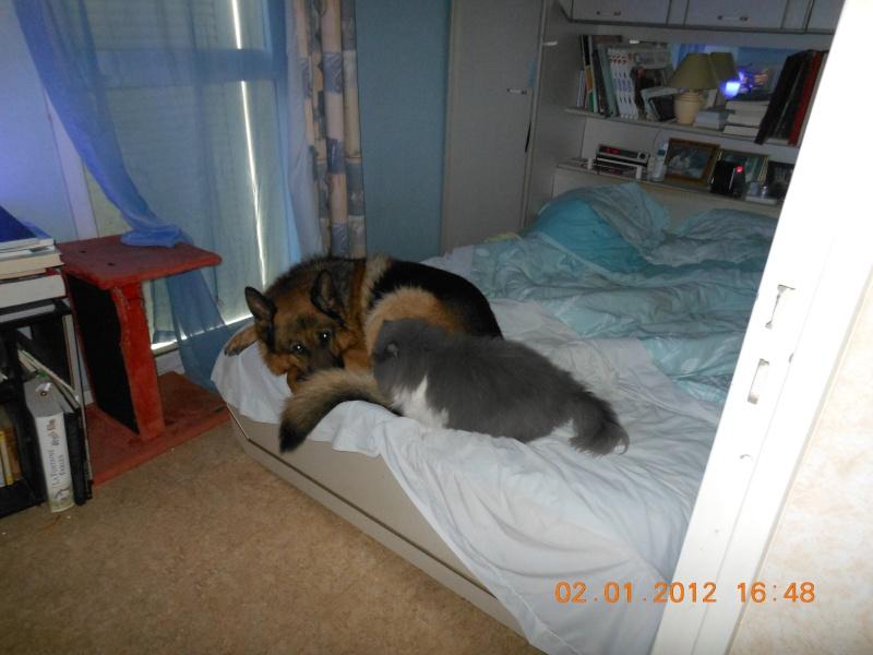 dscn0124 chat dans DIEGO