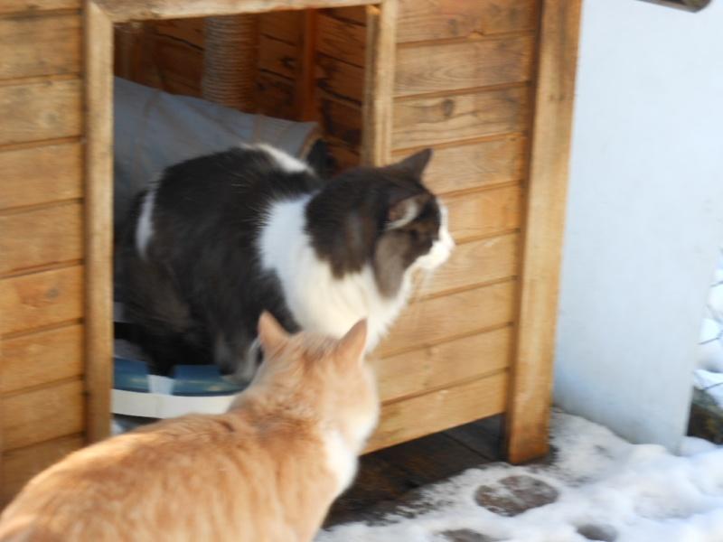 dscn0256 chats dans GOSPEL