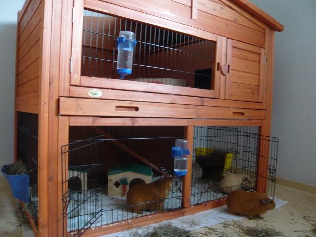 clapier pour mes chons hamsters cochons d 39 inde. Black Bedroom Furniture Sets. Home Design Ideas