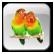 منتدى طائر الحب