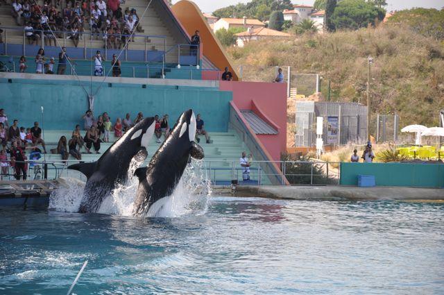 Rencontre animaux marineland