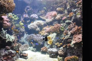 Projet bac b ton grand volume aquarium r cifal for Grand bac a poisson