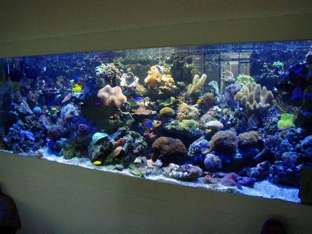 Decor Aquarium Ciment Prompt