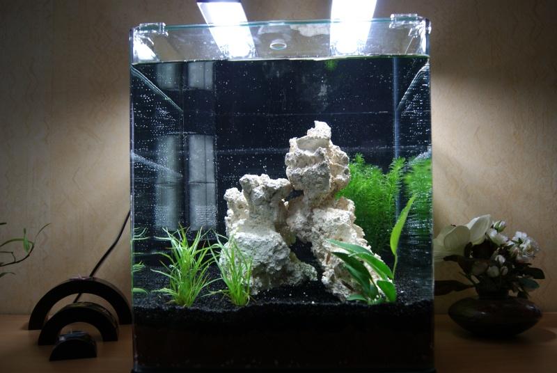 Mise en eau nano cube 60l dennerle for Poisson aquarium 60l