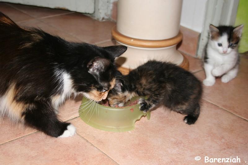 Rencontre chaton et chien