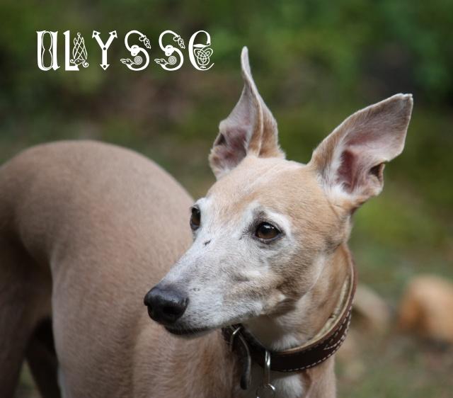 Ulysse, le fils de Loti