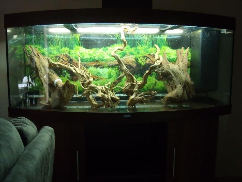 Mon projet de reprise de l 39 aquariophilie juwel vision for Racine aquarium