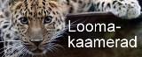 Amuuri leopardid