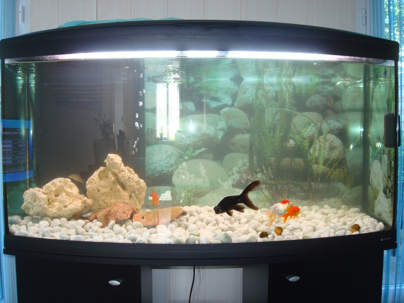300l poissons japonais for Aquarium rouge