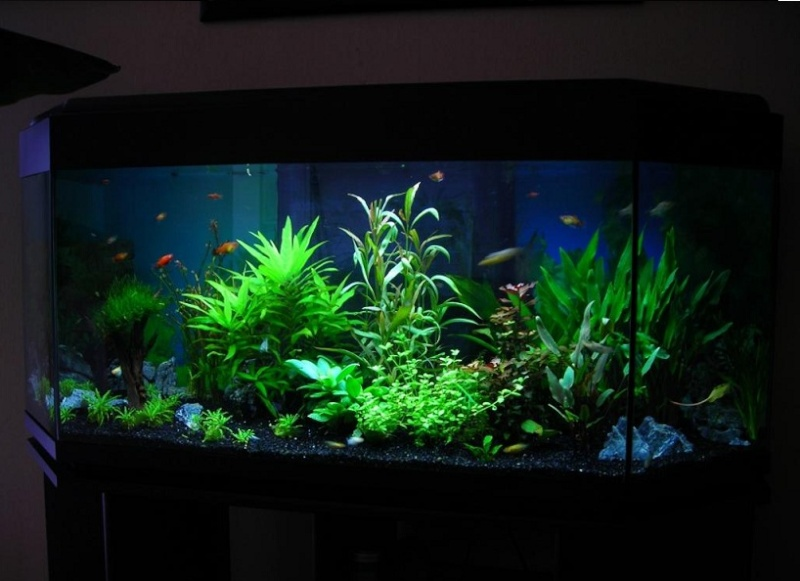 mes aquariums 240 l communautaire et 30 l aquascape photos page 2. Black Bedroom Furniture Sets. Home Design Ideas