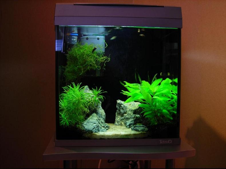Aquarium angle arrondi for Aquarium angle