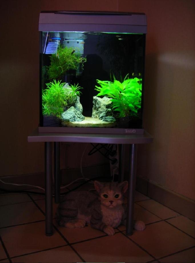 Mes aquariums 240 l communautaire et 30 l aquascape for Bac a poisson 500l