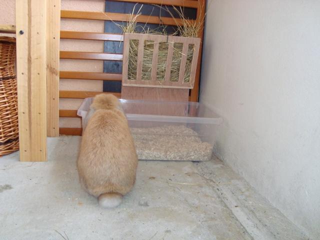 Fabrication de ratelier crush et lilo for Abreuvoir lapin fait maison