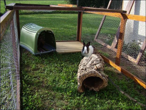 Le terrier des lapins afficher le sujet vos for Enclos exterieur pour lapin