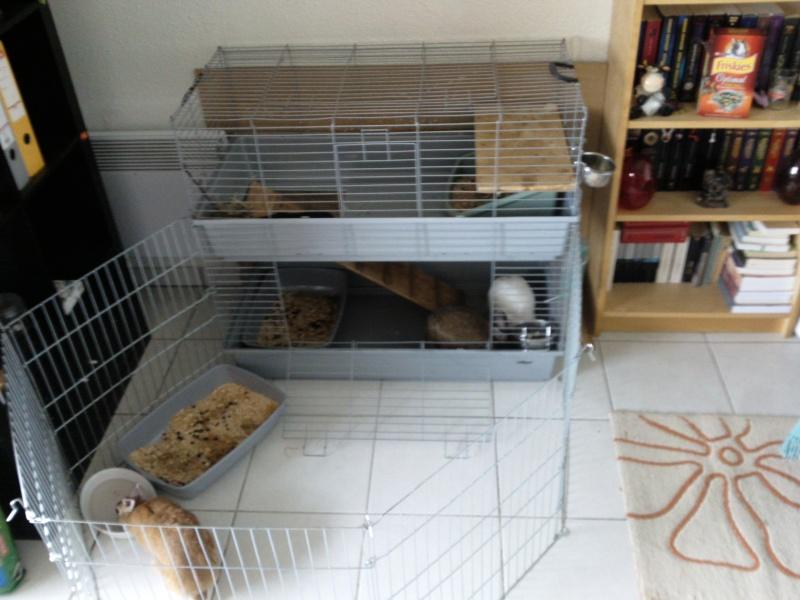 cage clapier deux etage lapin pour comparer les prix. Black Bedroom Furniture Sets. Home Design Ideas