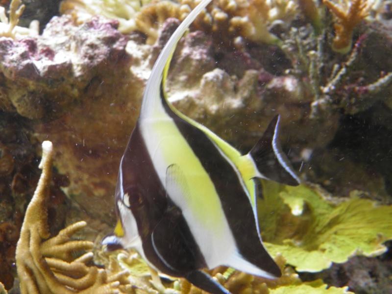 Aquarium eau de mer vers for Aquarium de mer