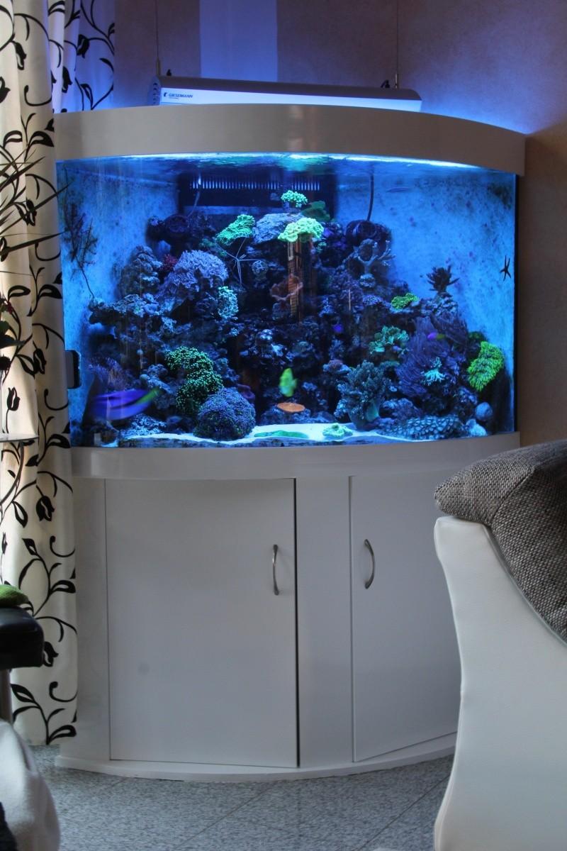 mein 420 l eckaquarium seite 3 sonstige hersteller und sonderanfertigungen dein meerwasser. Black Bedroom Furniture Sets. Home Design Ideas
