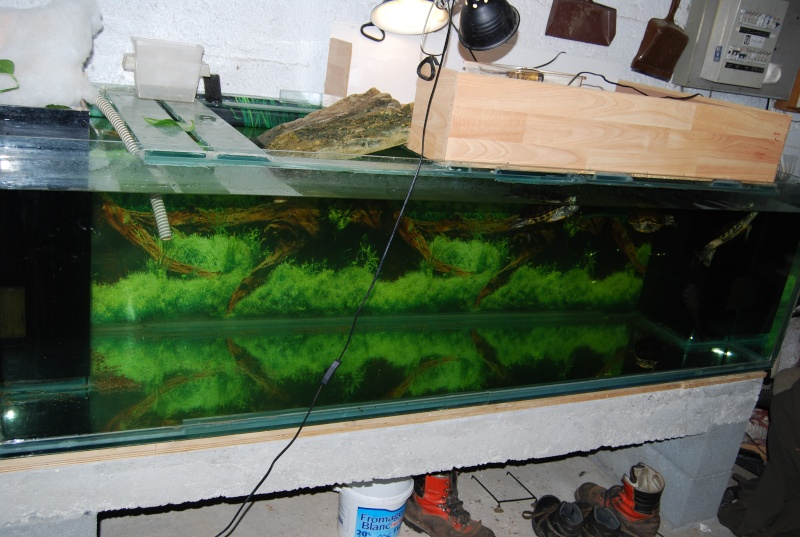 Aquarium tortue a vendre 28 images tortue aquatique a for Aquarium tortue