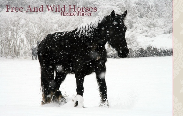 Free And Wild Horses