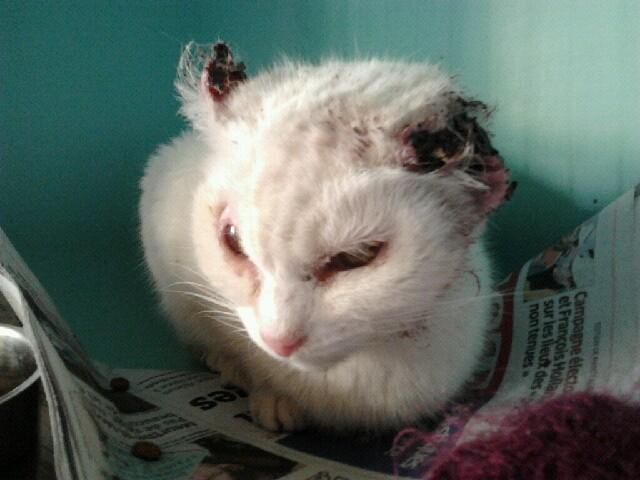 Attention au soleil protégez vos animaux d'un cancer