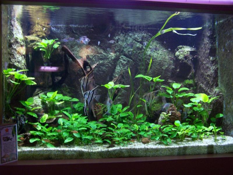 d 233 cor aquarium scalaire