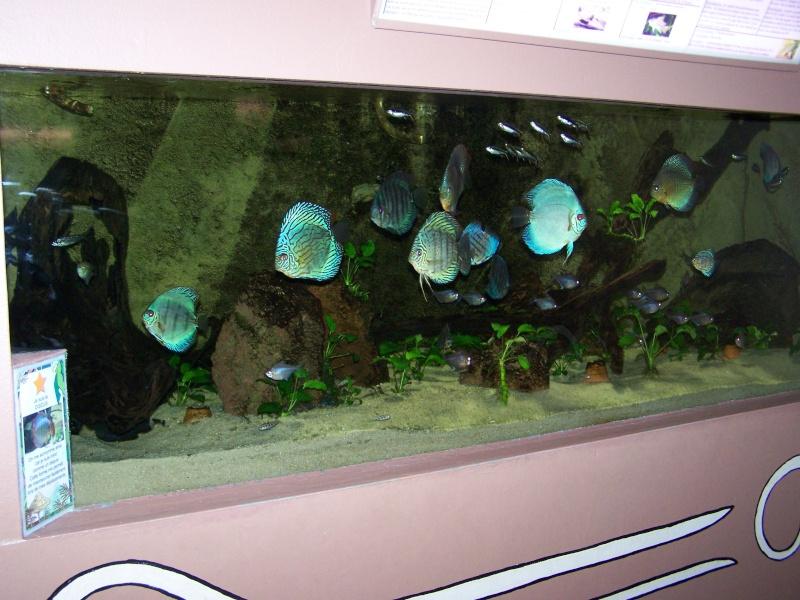 petits aquariums équipes