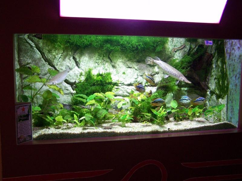 Pr sentation aquarium des tropiques for Bac a poisson 500l