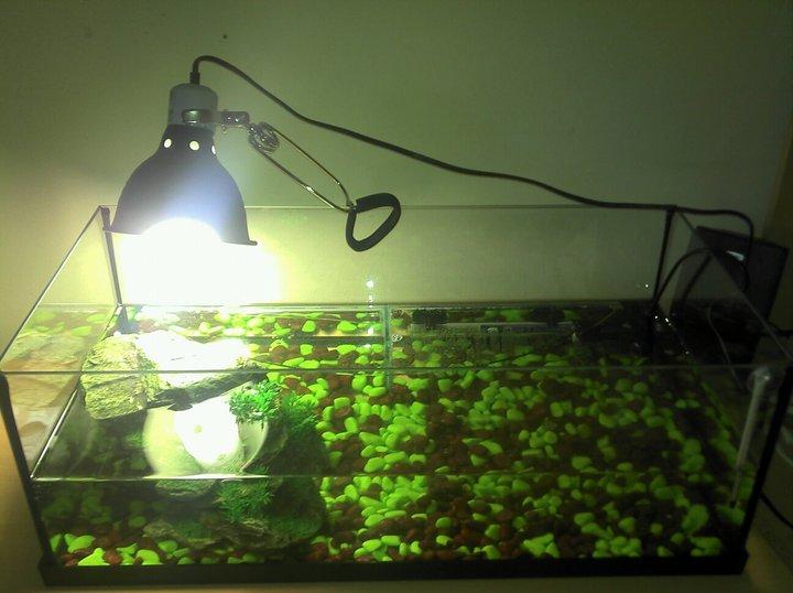 lampe chauffante pour tortue